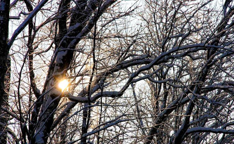 Sonne Winter Am Koenigsseer Fussweg