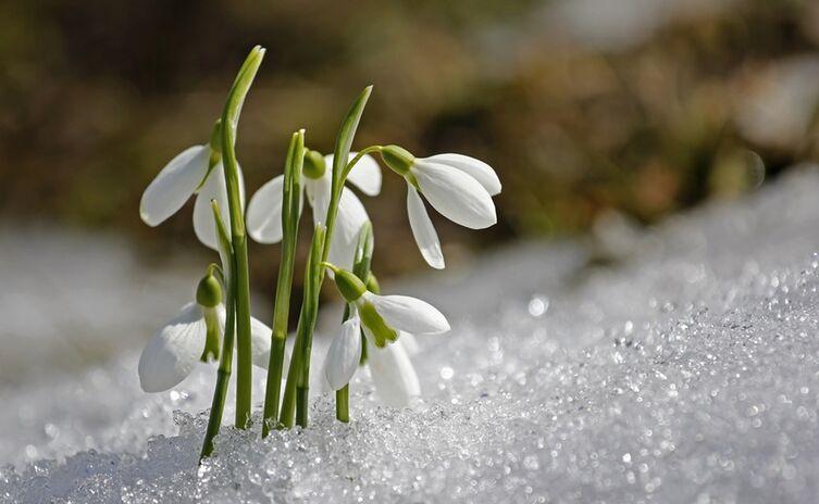 Spring 1166564 1920