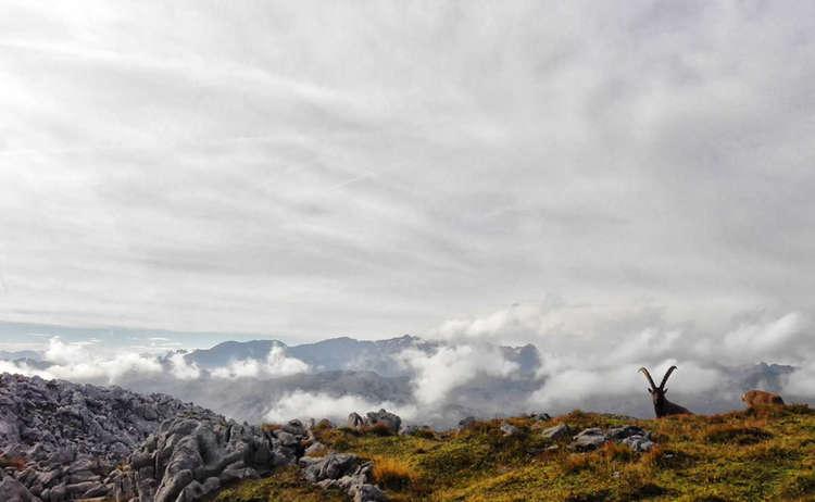 Das Hagengebirge: Revier der Steinböcke